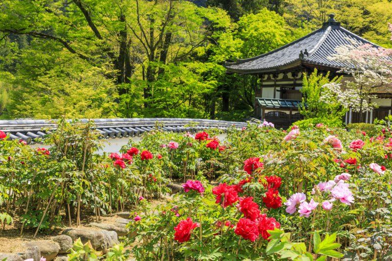 花と新緑溢れる景色(Scenery created by colorful flowers and fresh green)