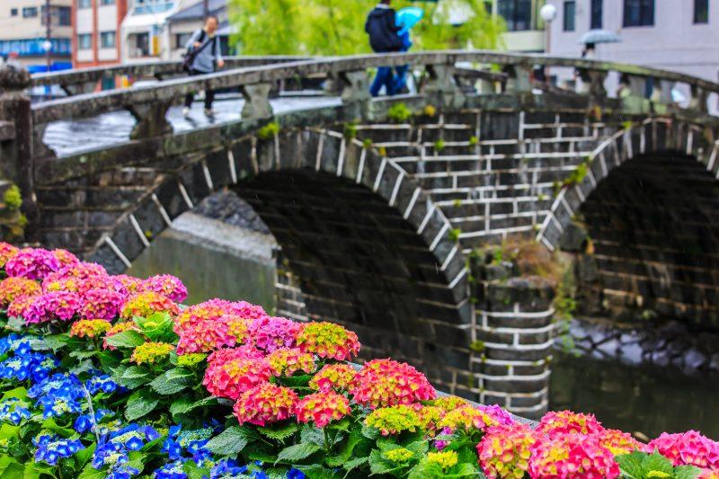 咲き誇る長崎の紫陽花(Hydrangeas being in full bloom in Nagasaki)