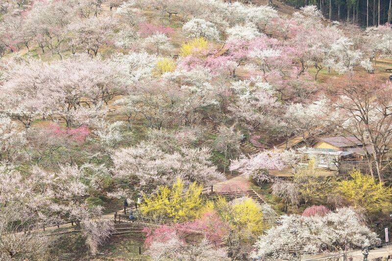 自然の息吹が薫る地でリフレッシュ!立川周辺で開催されるお祭り2選