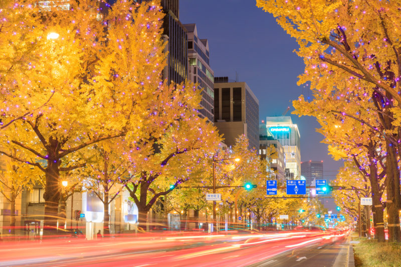 あたたかな光の景色が広がる御堂筋(Midosuji where a heart-warming view of light spreads out)