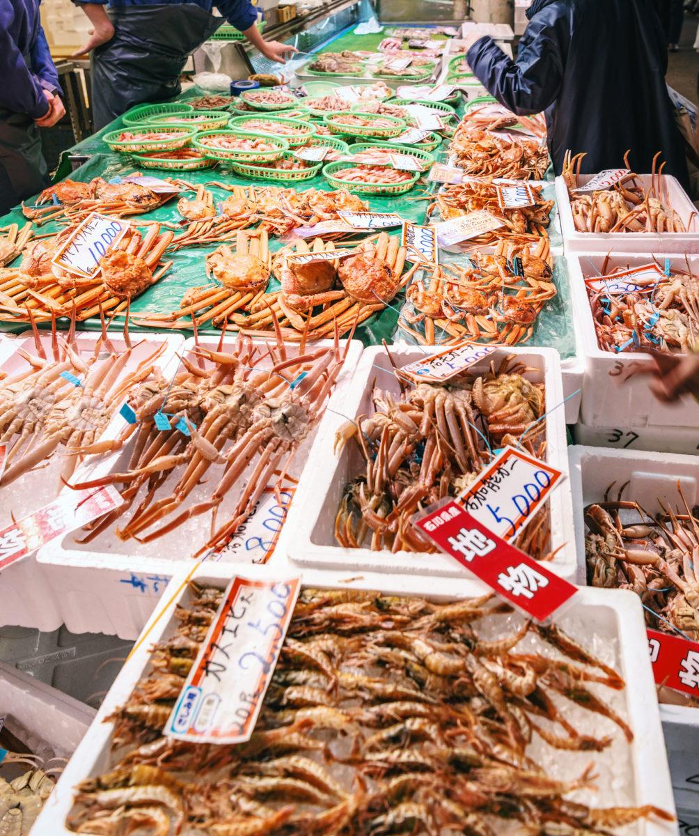 福井の新鮮なかに(Crabs caught in the sea of Japan)