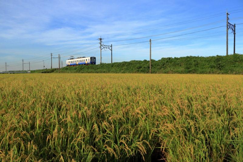 田園風景の中を走る越前鐵道(Echizen Railway running in pastoral landscape)