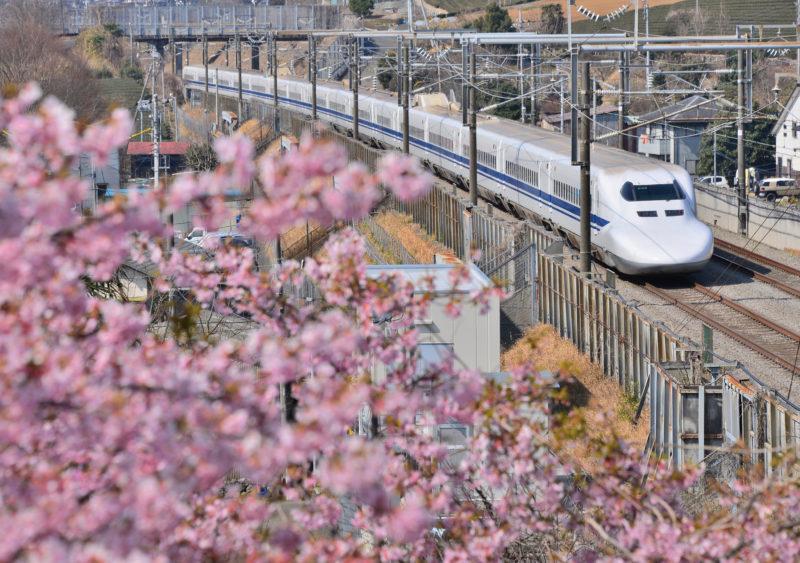 桜と新幹線(Cherry blossoms and Shinkansen)