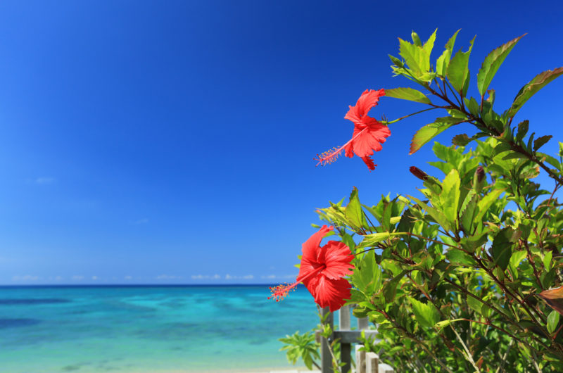 沖縄の象徴的な景色(Okinawa's symbolic scenery)