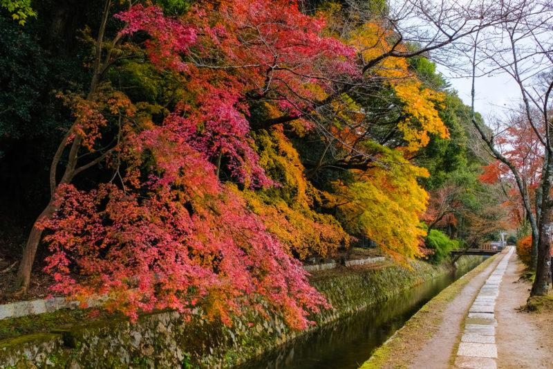 紅葉した哲学の道( Philosopher's Path colored by autumn leaves)