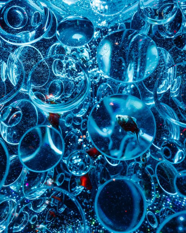 アートアクアリウムの作品(Artworks of Art Aquarium)