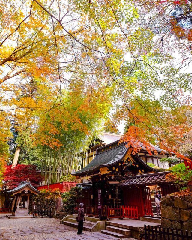 仙台&山形へ紅葉狩りトリップ。10月中旬から11月下旬に見頃を迎える、主要駅から30分圏内の「秋の映えスポット」を選んでみた