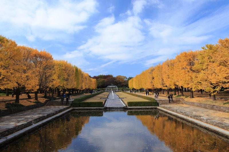 昭和記念公園の並木道(The row of tree at Showa Memorial Park)