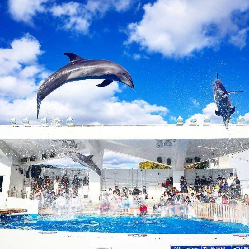 九十九島水族館海きららのイルカショー(Dolphins' show performed at Kujukushima Aquarium Umi Kirara)