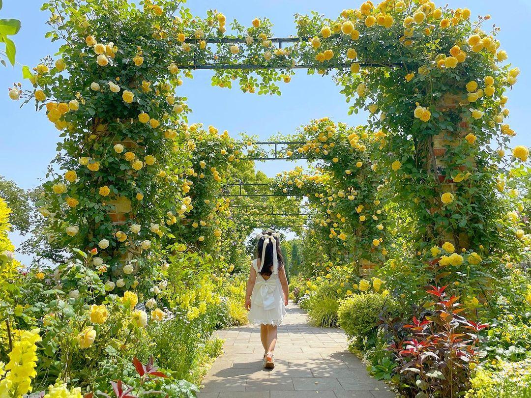 イングリッシュローズの庭(English Rose Garden)