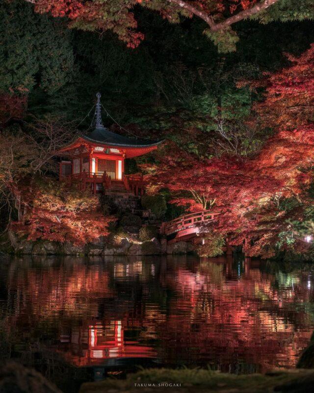 境内全体を鮮やかに彩る紅葉が魅力。広い敷地をゆっくり散策しながら楽しめる「醍醐寺」
